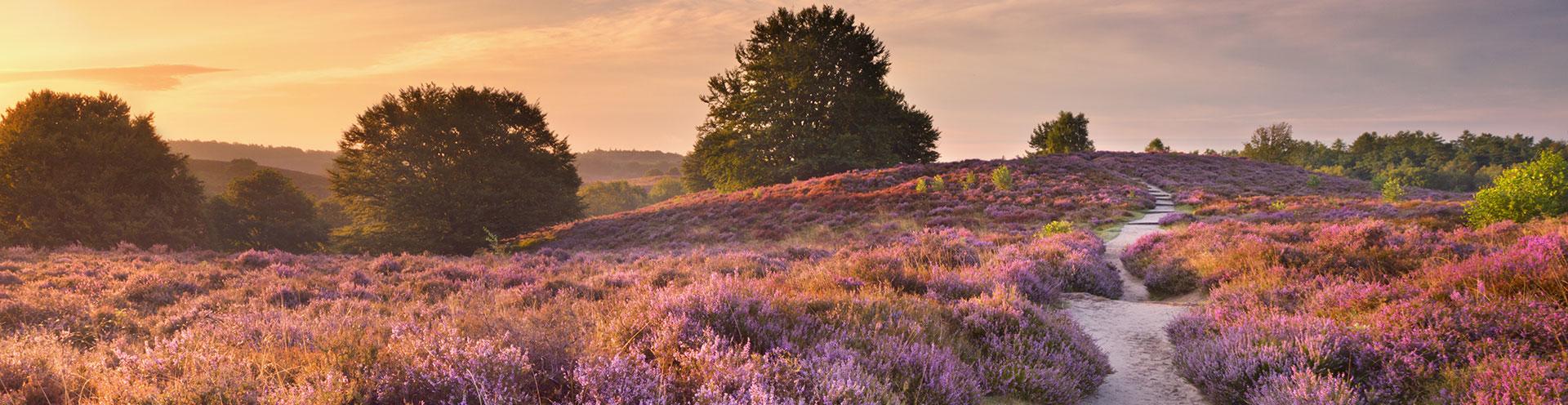 Bezoek Het Nationaal Park De Hoge Veluwe - Goedverblijf.nl blog