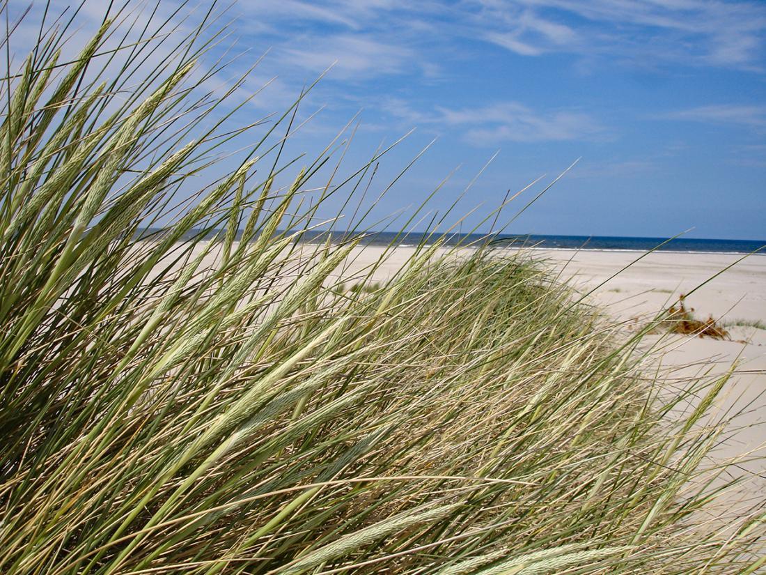 Terschelling overnachting strand duinen