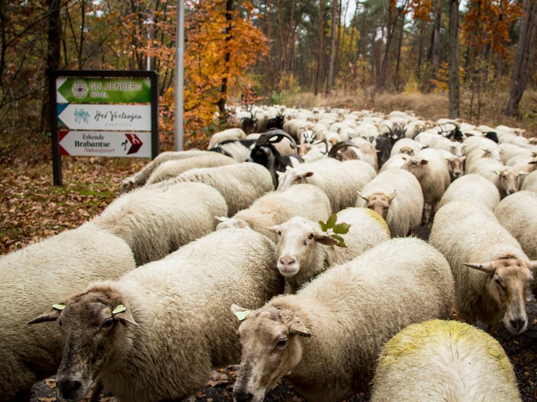Weekendjeweg Brabant Omgeving
