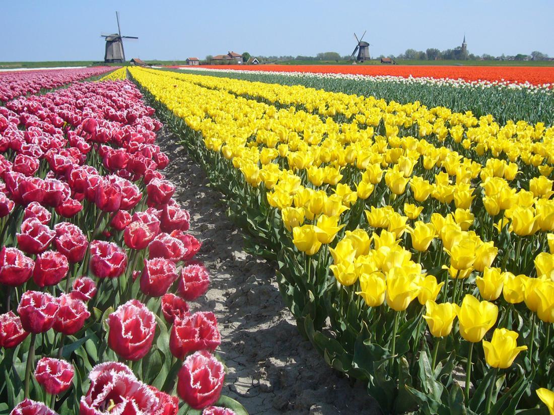 Weekendjeweg Alkmaar Omgeving