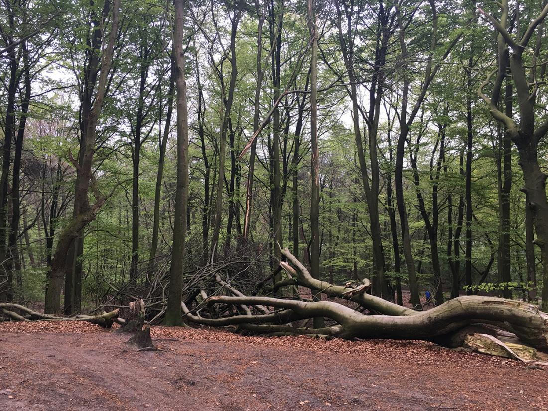 Weekendjeweg Veluwe Omgeving bos