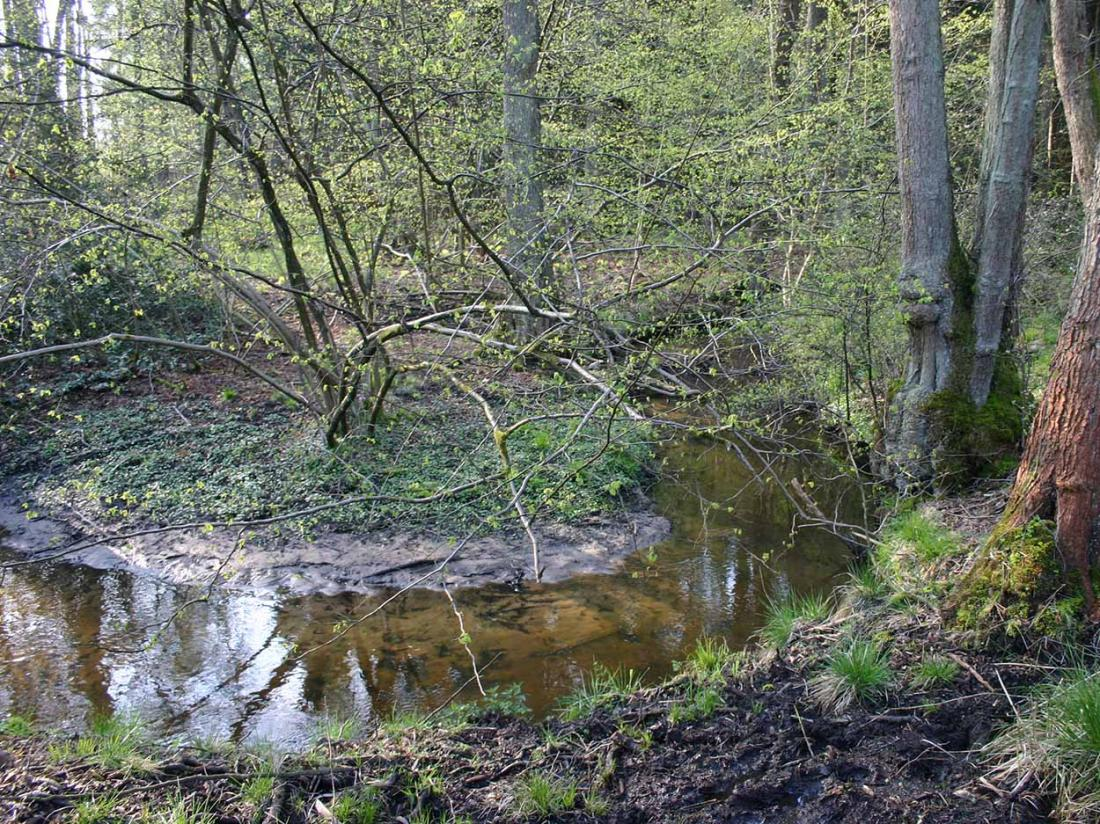 Boshotel Vlodrop Limburg Omgeving De Meinweg