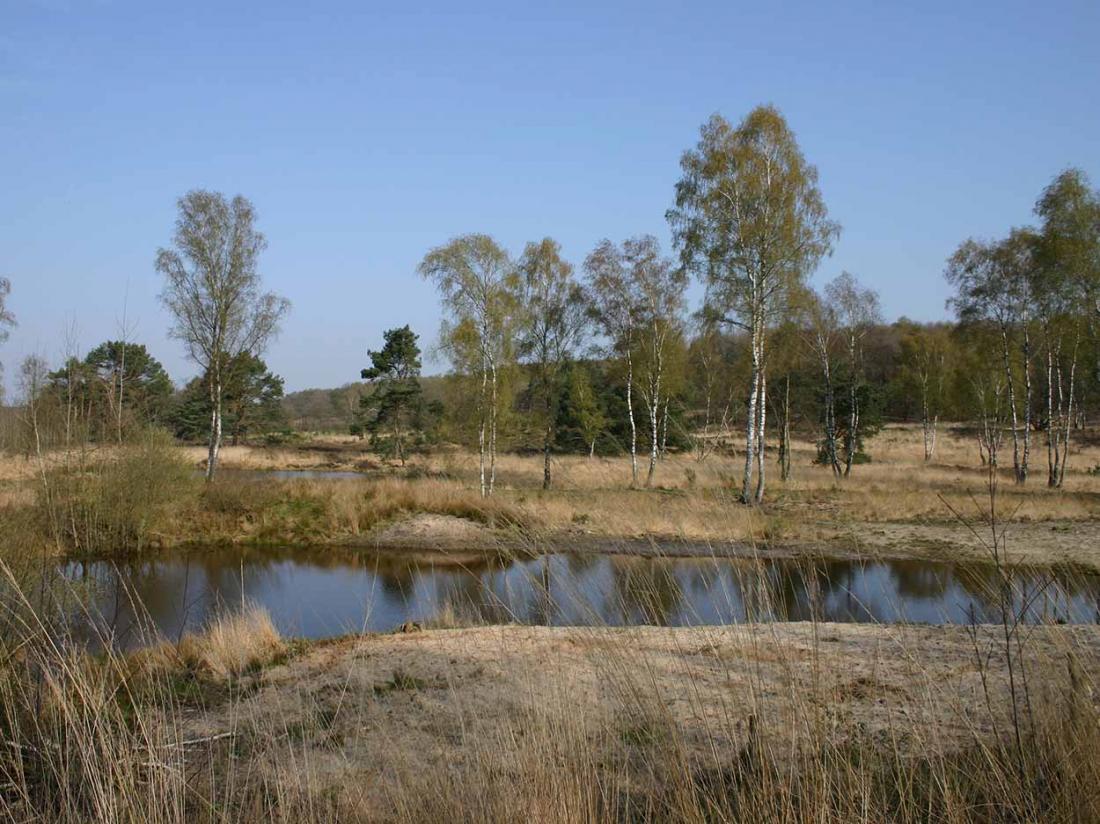 Boshotel Vlodrop Limburg Omgeving Meinweg