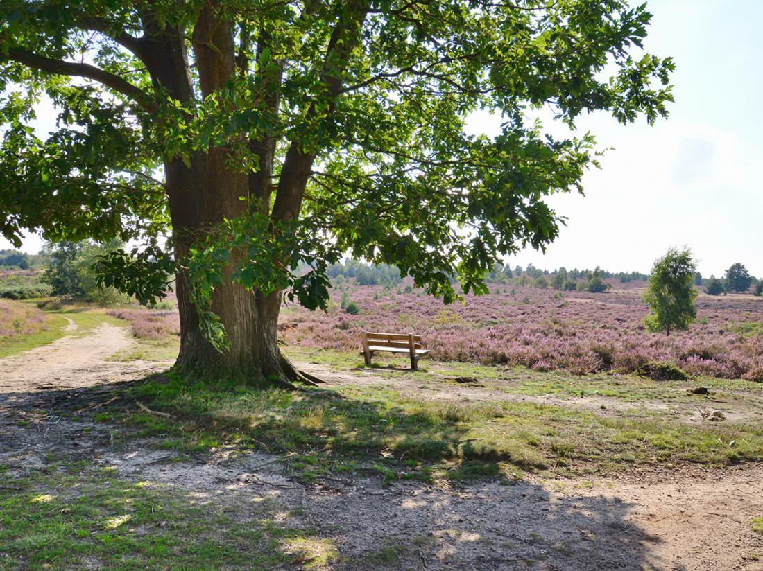 Landgoed de Uitkijk Hellendoorn Boom