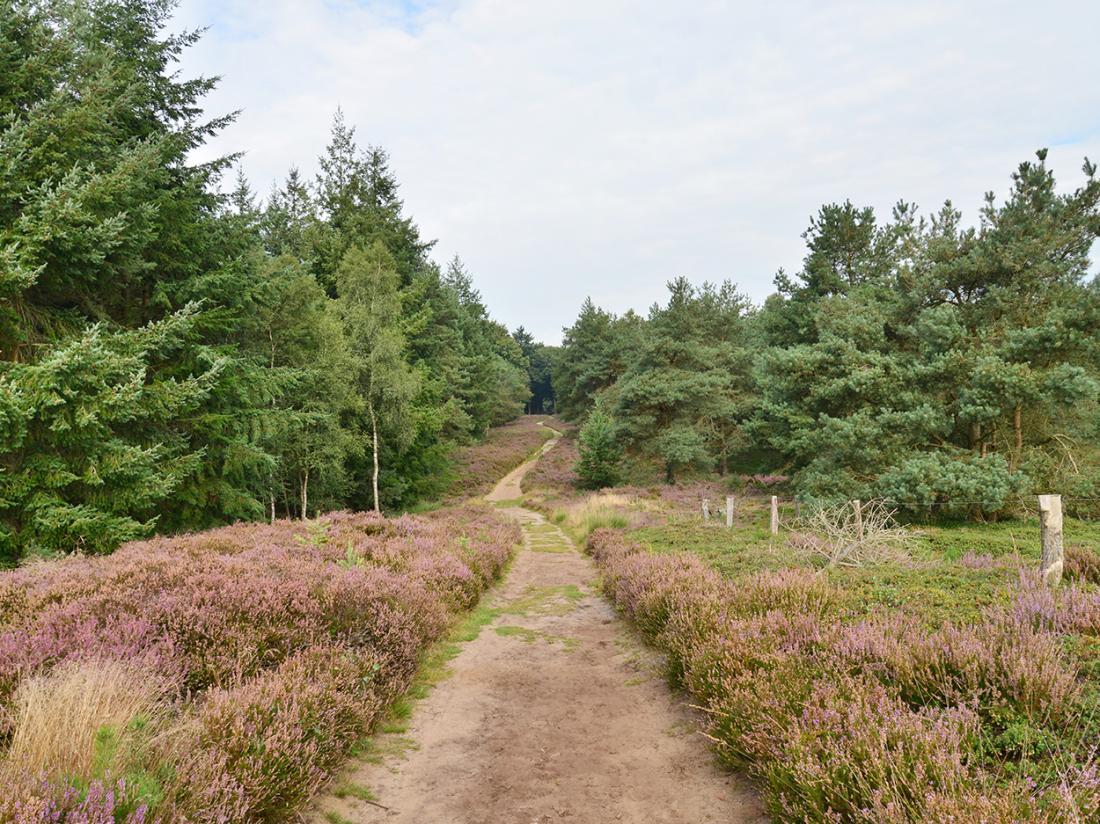 Landgoed de Uitkijk Hellendoorn Bos