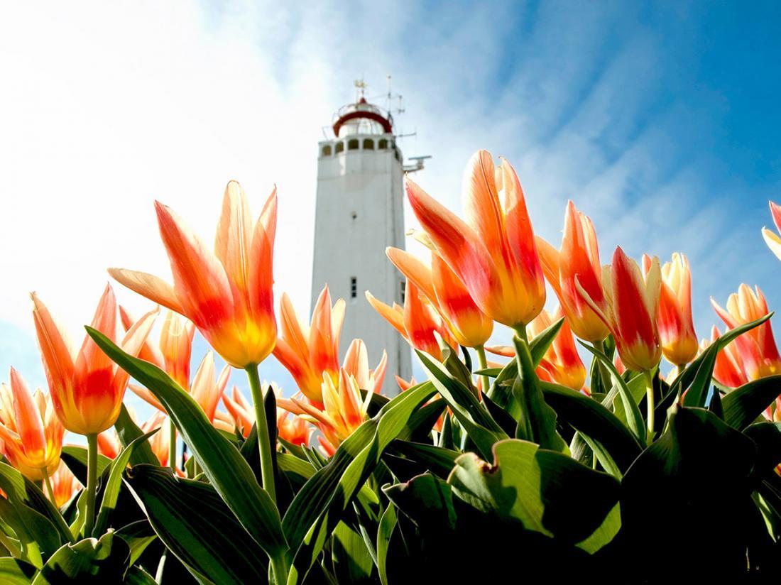Hotel Astoria Noordwijk aan Zee Vuurtoren