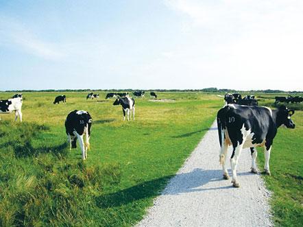 Weekendjeweg Heerenveen omgeving