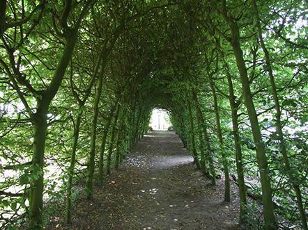 Landhotel de Greune Weide bomen